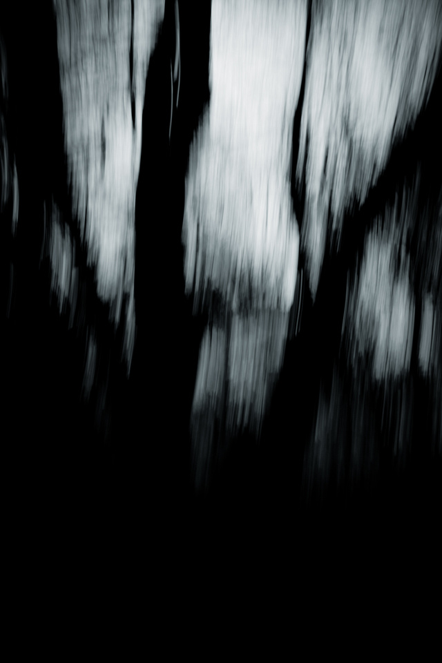 Dark Land: Forests of the Mind